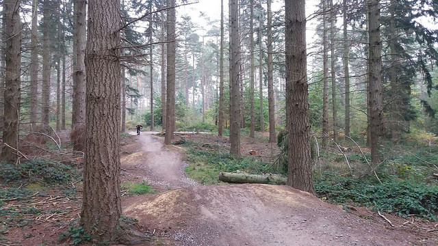 Cycling at Bedgebury Forest