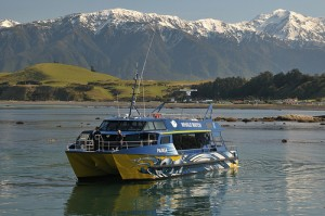 Photo: Whale Watch Kaikoura