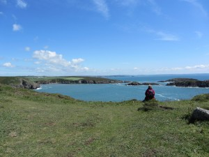 Pembrokeshire coat path between St justinian's bay and Porth Clais