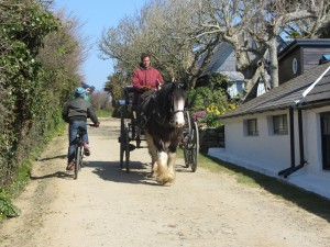Rush hour on Sark
